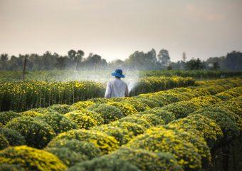Understanding Agricultural Entrepreneurship